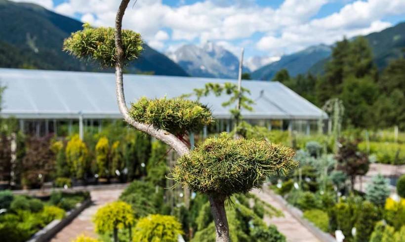 Garten- und Landschaftsbau Gallery 04